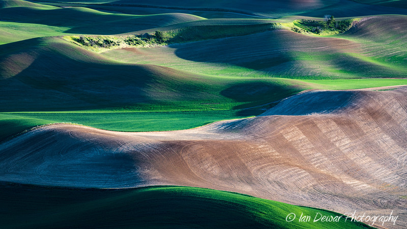 Springtime farmland in the Palouse