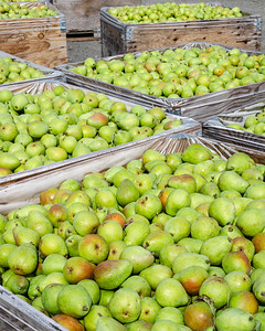 Pears for Market