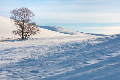 Winter on the Palouse, WA