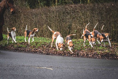 Easton Harriers 24/1/19 Copyright SEH Photography