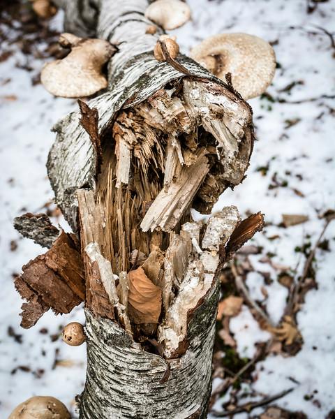 BYS-Winter16-45.jpg