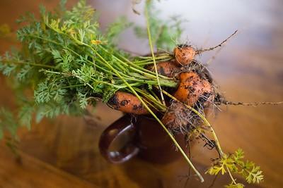 forgotten garden carrots