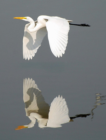TWO EGRETS AT ONCE