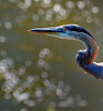 BLUE HERON AND SPARKLING JEWELS