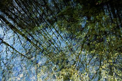 La rivière dans les arbres