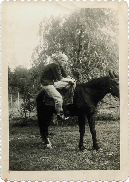 Lee Jr Horse