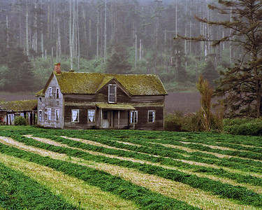 Historic Ferry House at alfalfa harvest time. A landmark of Ebey's Landing National Historical Reserve