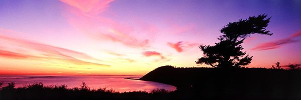 Ebey's Sunset with Tree: Ebey's Landing National Historical Reserve. (Original shot on transparency film with Hasselblad XPan)