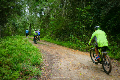 Riders on an ebike tour in the forests surrounding the Garden Route Dam in George, South Africa.