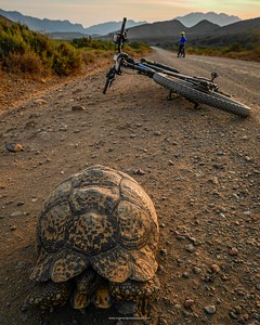 Such a lovely ride into the dust and dry towards Ouberg Pass near Montagu and came across this friendly tortoise on the way home. 😊😊😊