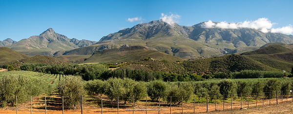 Olive groves and the Swartberg Mountains. One of many exquisite scenes we passed on our ride.