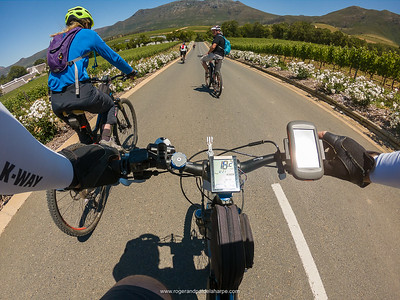 The rose lined road into Groot Constantia while on an eBiking (mountain biking) tour with eBike Cape Town. Western Cape. South Africa