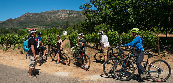 We stopped off at Buitenverwachting, Klein Constantia and Groot Constantia vineyards while on our eBiking (mountain biking) tour with eBike Cape Town. Western Cape. South Africa