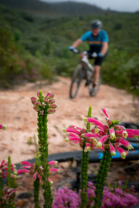 Mountain Biking. George. Garden Route. Western Cape. South Africa
