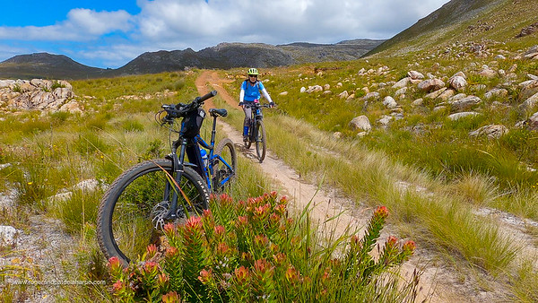 If you're into fynbos, there's lots for you to enjoy.