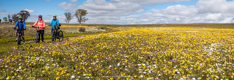And there they were in their millions - what a wonderful way to see wild flowers.