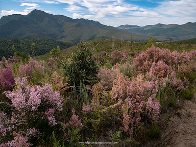 The fynbos is thick and lush on parts of this ride.