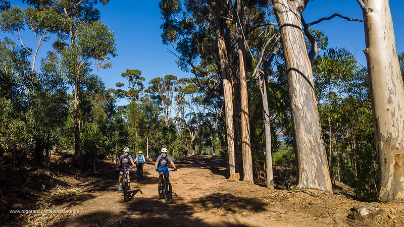 The ride takes you up the gum tree lined Old  Viljoen's Pass. I wonder who planted these huge trees?