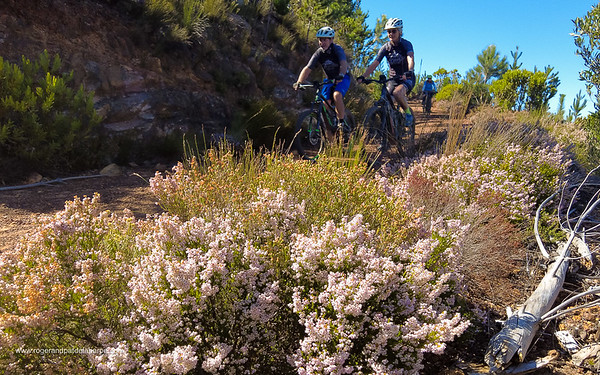 There are some wonderful patches of fynbos on the route.
