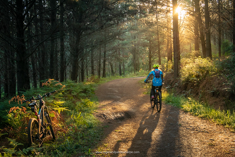 eBiking (mountain biking) at Witfontein, part of the Outeniqua Nature Reserve, is always a pleasure.