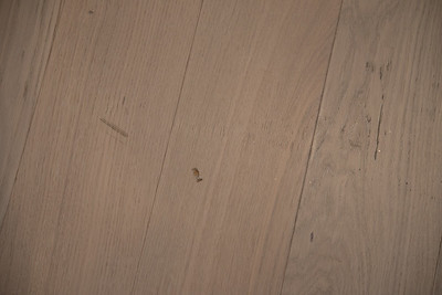 1210_Floors-2
