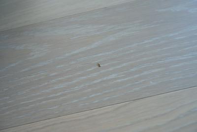 1210_Floors-11