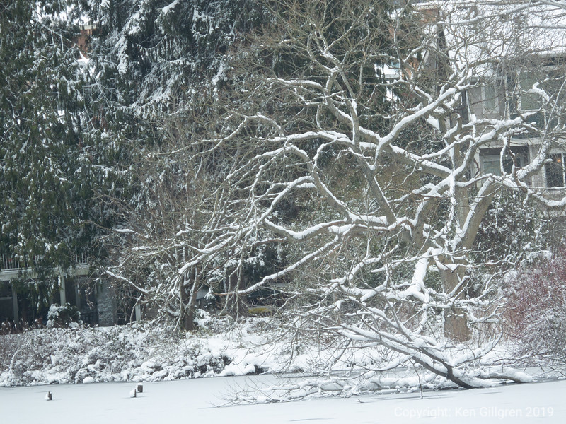Snow-painted Branches