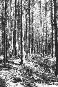 JW2_5481_trees