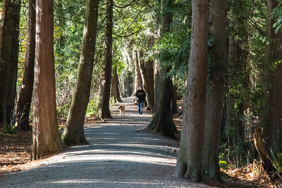 JW2_5979_forest-walk
