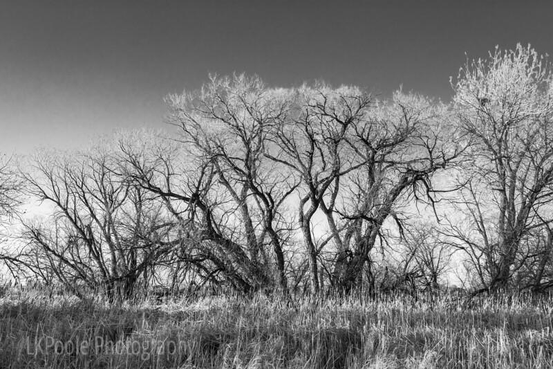 Trees at Boyd Lake