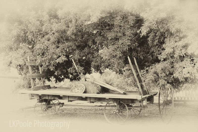 Old wagon at Timberlane Farm, Loveland CO