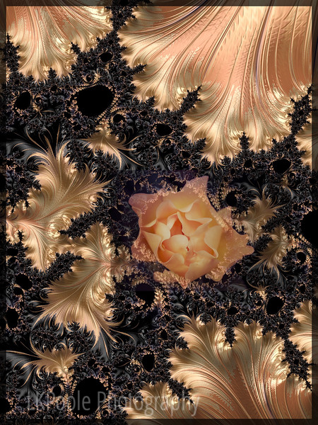 Fractal Rose