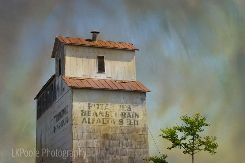 Beans, Grain, and Alfalfa