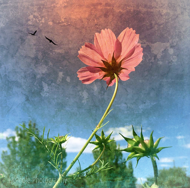 Cosmos Reaching Up