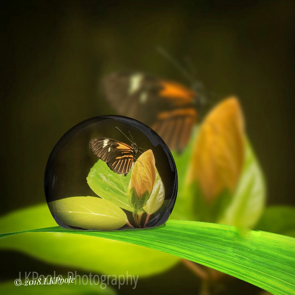 Butterfly in a Raindrop