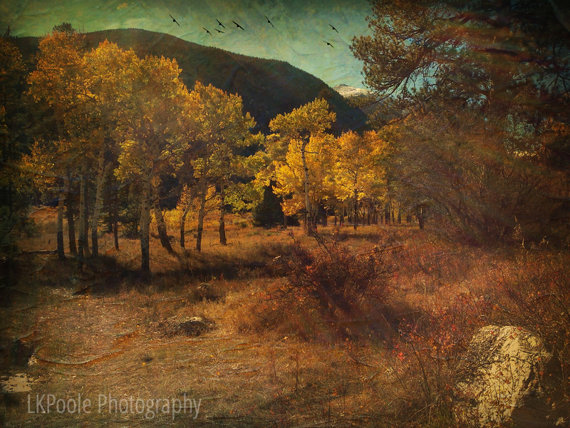 Textured Autumn in the Rockies