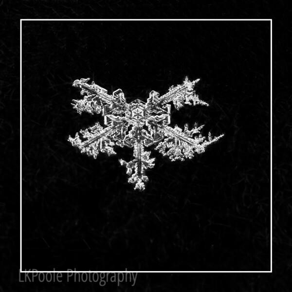 Five Point Snowflake