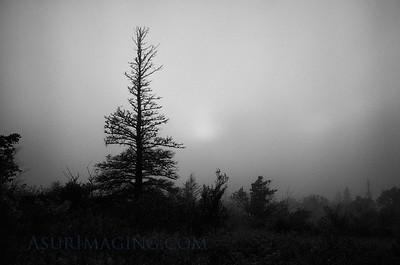 Foggy evening in Copper Harbor