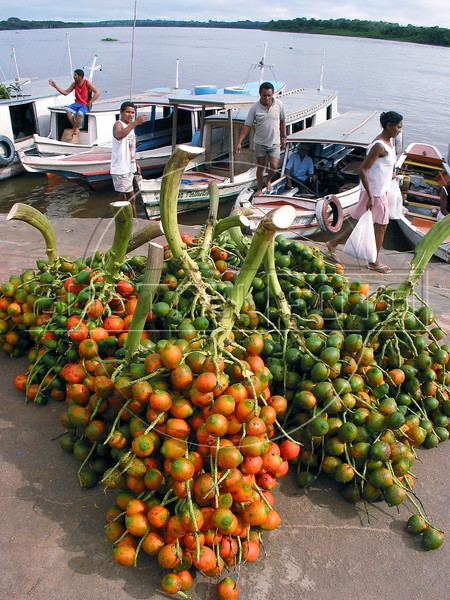 Pupunha, also known as peach palm, pejibaye, or chonta (Bactris gasipaes Kunth) awaits to be loaded onto a riverboat during the weekly market day in a small town in the Amazonian state of Para. (Australfoto/Douglas Engle)