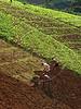 Workers till the land at a vegetable field near the mountain resort city of Petropolis, near Rio de Janeiro. (Douglas Engle/Australfoto)