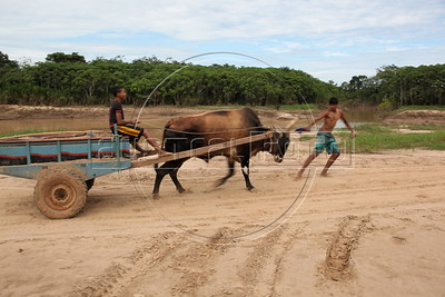 Boys push an Ox and cart near the Acre River,  where three South American nations meet: Brazil (where the cart is), Bolivia (top left) and Peru (top right). The Transoceanic Highway crosses from Brazil into Peru near the location. Financed in part by Brazil, and built by a consortium which includes Brazilian construction company Oderbrecht, the US$1.3 billion highway will link Peru's Pacific ports, and thus China, with the regional powerhouse of Brazil, poised to become the 5th largest economy in the world. (Australfoto/Douglas Engle)