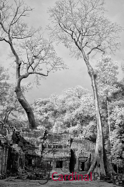 Black and White Infrared Image of Trees over Ta Phrom Temple, one of the Angkor Temples in the Apsara Comples, Siem Reap, Cambodia