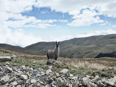 llama welcome
