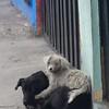Ecuador dog buddies. Living on the street.