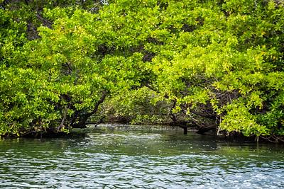 Black Turtle Cove