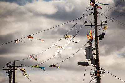 Kites on the line
