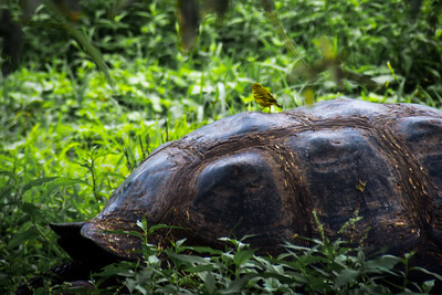 Tortoise with Yellow Warbler