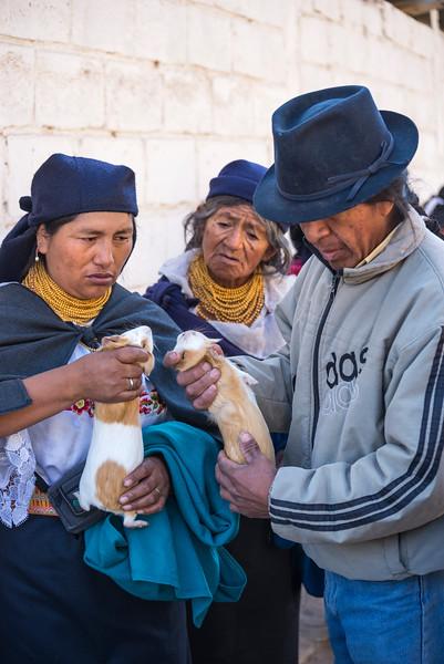 Shopping for guinea pigs (cuy), Otavalo, Ecuador