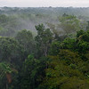 Rainforest Canopy Panorama