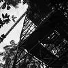 Canopy Walk Tower and Bridge